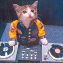 cats can also be dj/s