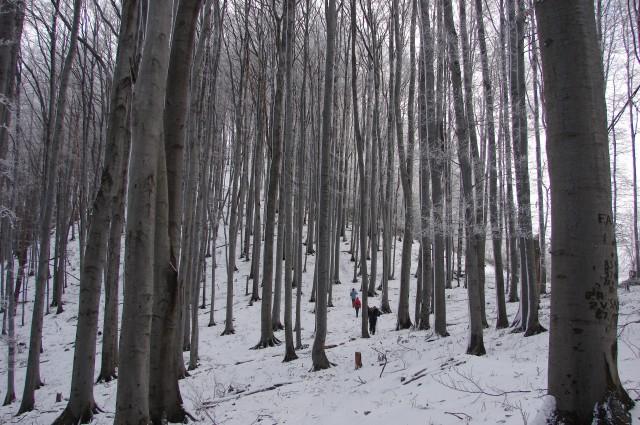 Kal - Mrzlica 3.1.2009 - foto