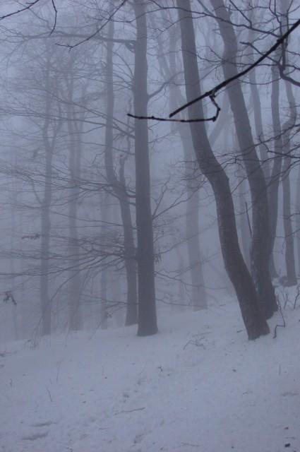 Boč 18.1.2009 - foto