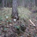 Zelo strmo v gozd, vendar lepo okrašeno s telohi.