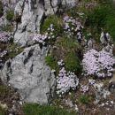 S cvetjem okrašen vrh Kladiva