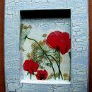 Travniško cvetje- Papaver