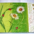 Pomladna-  marjetica -Bellis perennis