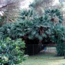 Brioni- Detajl -Prekrasne skupek palm