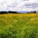 poletni travnik
