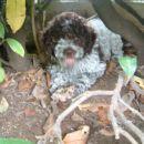 ovo je moj mali pas Buddy koji na ovim slikama ima malo manje od 2 mjeseca i ovo je slikan