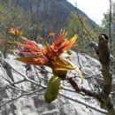 v nižjih legah je pomlad močnejša