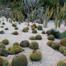 kaktusi vseh vrst in velikosti