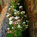 botanični vrtiček v steni