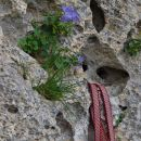 tipična razčlenjenost skale v finalu