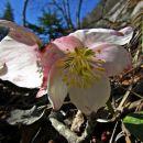 vse bolj diši po pomladi