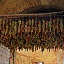 grozdje se suši, za ledeno vino mogoče?
