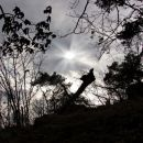 sila sramežljivo sončece