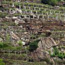 značilni vinogradi doline aoste