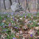 pomlad je že tu