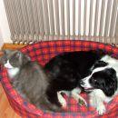 Kdo pravi da se mačka in pes ne razuneta?