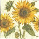 sončnice