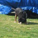 Doma na vrtu - 11.3.2007