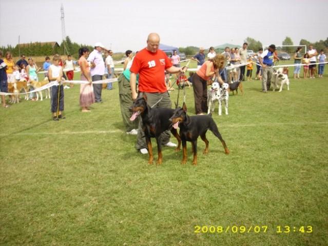 CAC GRADIŠKA 2008 - foto