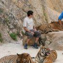 Stik s tigrom