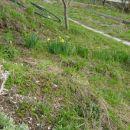 GODOVČ-3-05.04.2006