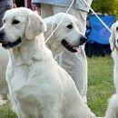 Mia, Hank, Sophy