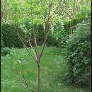 eno figo mam na vrtu
