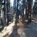 Tukaj sem zavil levo po bližnjici,kjer sem se spustil po koreninah.Desno sem se vrnil naza