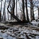 Vrh Potoške gore 1283m..Vrh je takole posijan z gozdom !