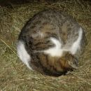 mačka spi in se ne pusti motit
