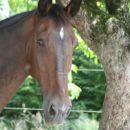 Jahalna šola-konjeniški center Vodice
