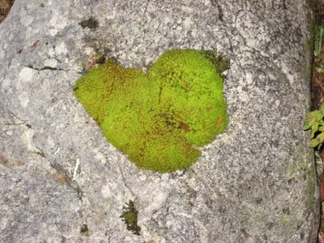 Tale srček iz mahu je bil položen na skalo ob poti.