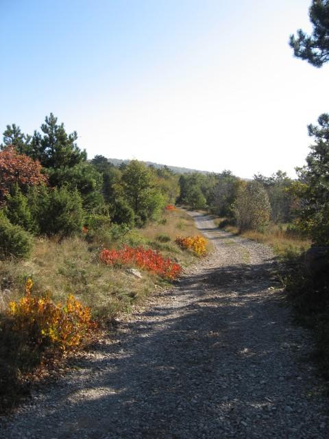 Zadnji del poti na Kokoš hodimo po cesti, ki je idealna za gorske kolesarje