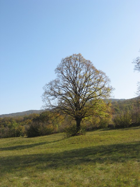 Lepo drevo na lep jesenski dan