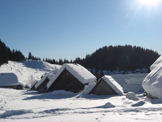 Pokljuka: Praprotnica, Zajamniki - 4.1.2009 - foto
