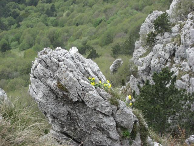 Vrtiček na skali