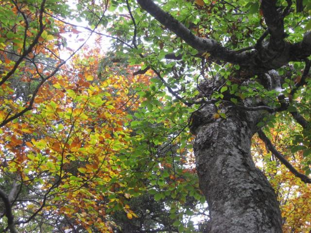 Gozd se že barva.