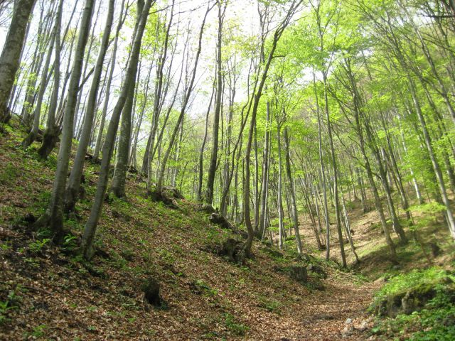 Udoben vzpon skozi mlado zelen gozd