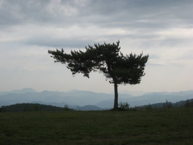 Drevo z razgledom na Kuclju