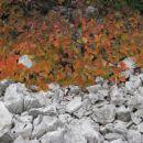 sivo-oranžno