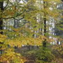 jesenski gozd