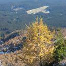 zlati macesen z razgledom na planino zajavornik
