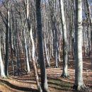 spomladi mora biti tale gozd prelep v zeleni preobleki