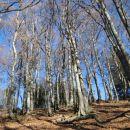 prijetna hoja po gozdu nazaj do izhodišča