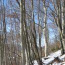 bukov gozd pod vrhom