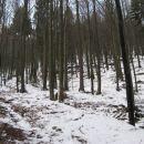 prvi del poti po gozdu