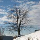 lepo drevo pod javornikom