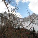 šipek sredi zime v gorah