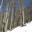 vračanje čez bukov gozd pod planino