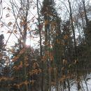 sončni žarki so le za kratek čas pokukali skozi veje